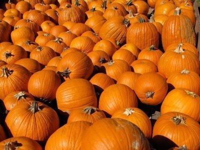 Pumpkin-Pile--2010